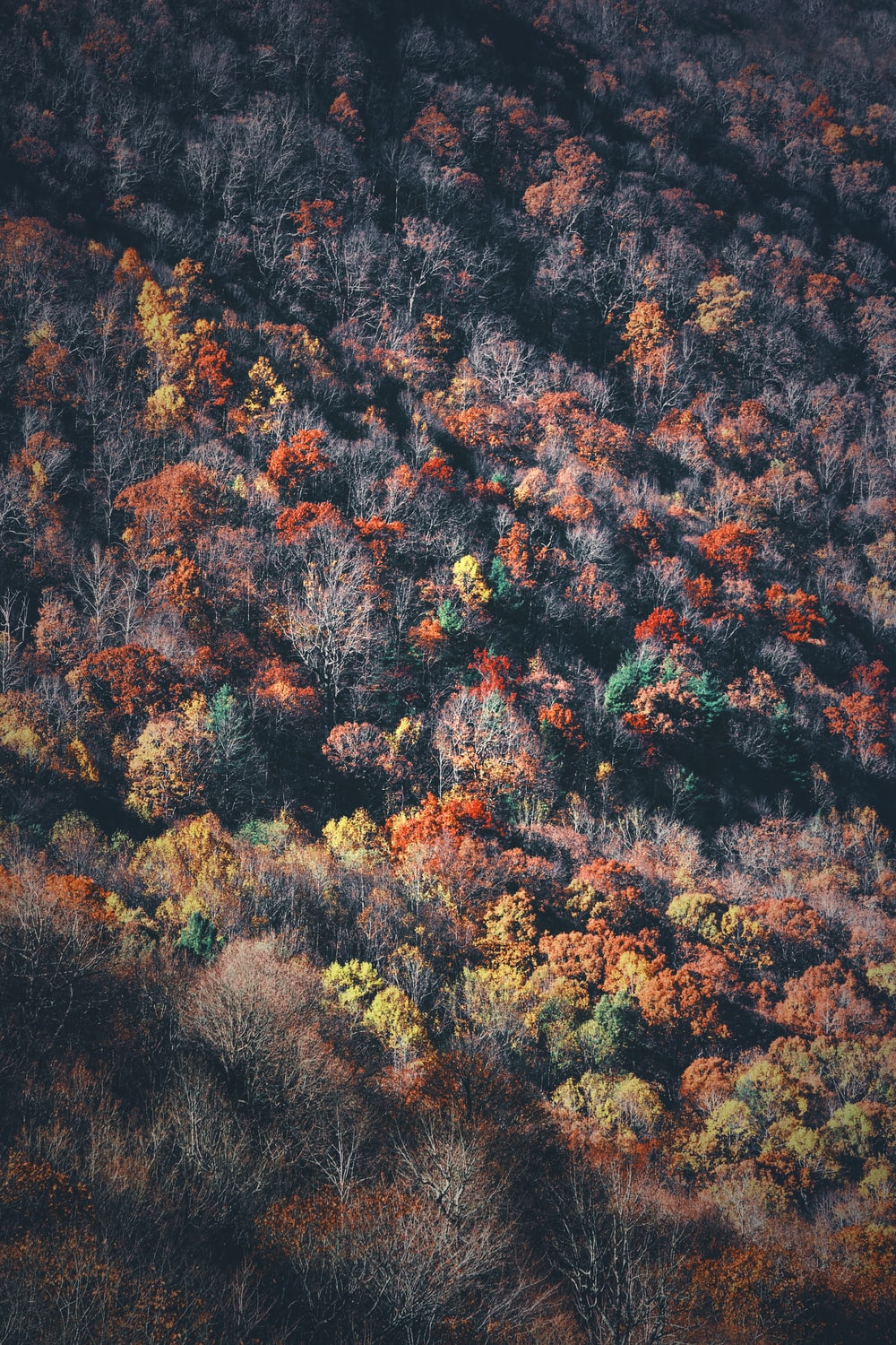 bird's-eye view photography of forest