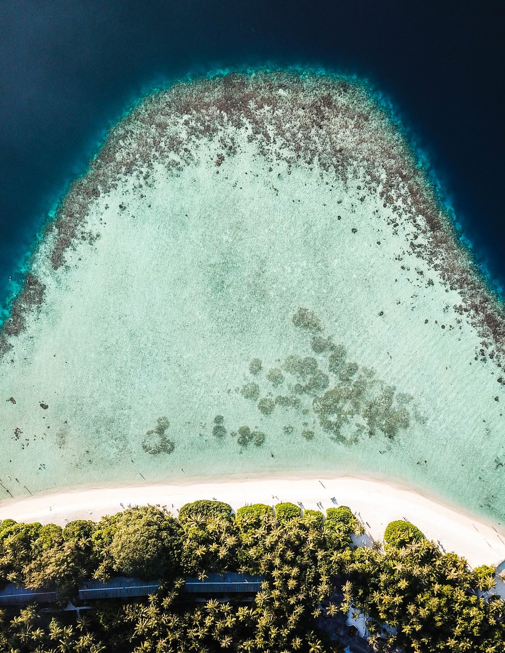high-angle photography of trees and sand
