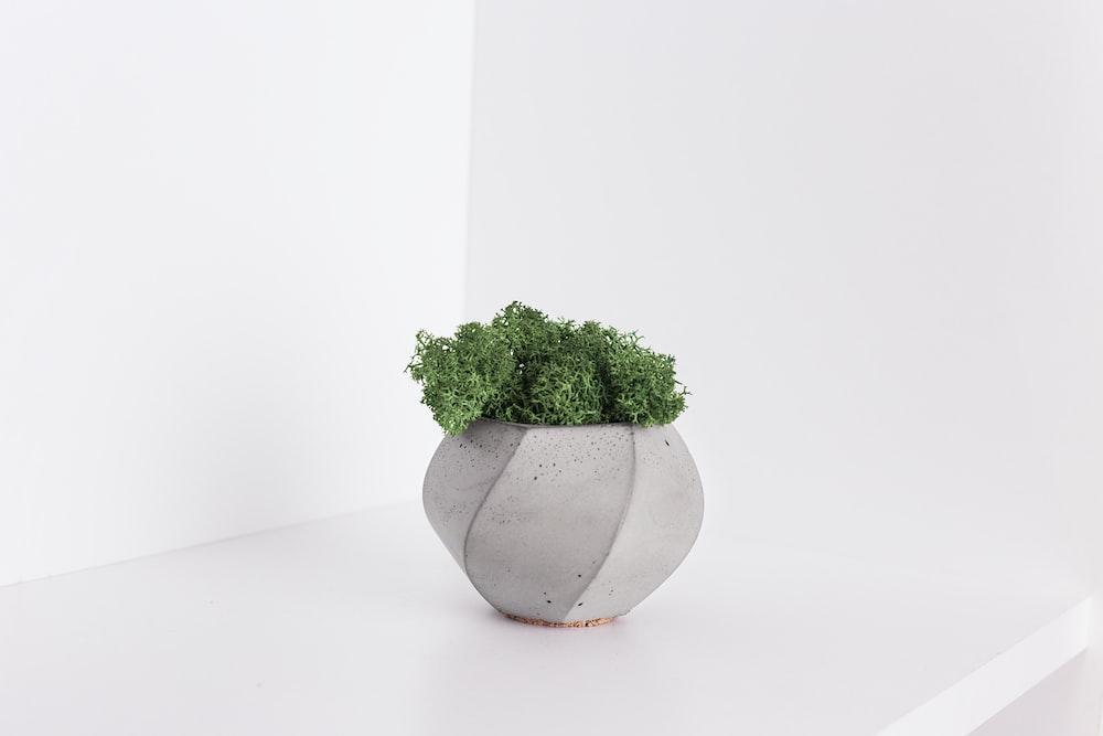 plant in gray pot