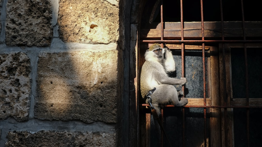 Monkey on a window in Lebanon