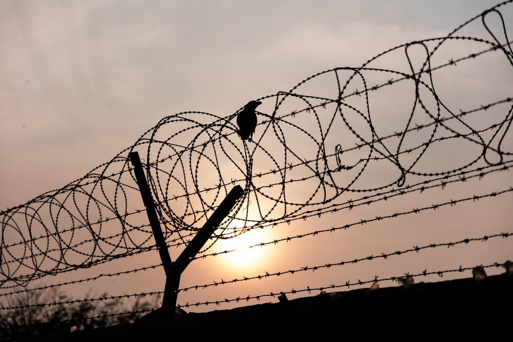 black bird perched on barb wire during sundown