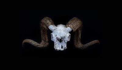 big horn sheep skull on black