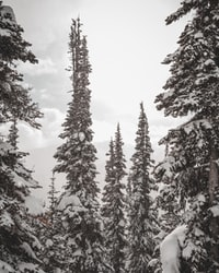 Each year I find myself in the midst of snowy wilderness skiing down slopes with a group of great friends. These images are collections I find to be the most beautifully captured of the incredible creation I was surrounded by // follow me on Instagram @jknepp