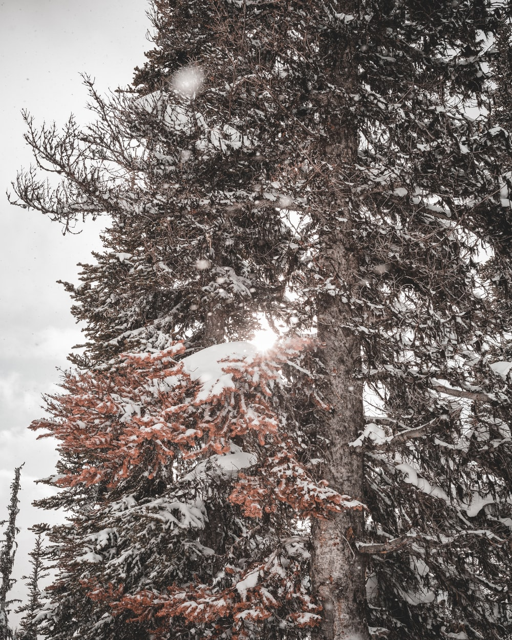 brown snow covered tree