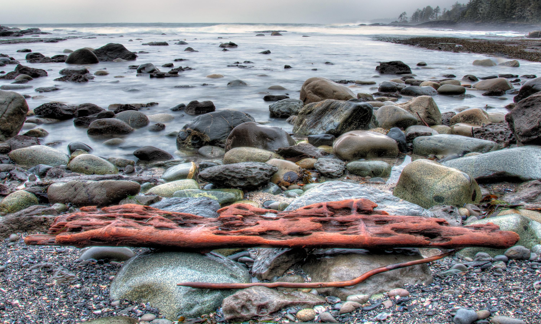 drift wood on rock near shore