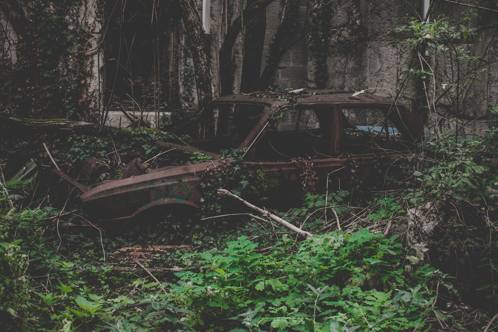vintage brown car covered with vines