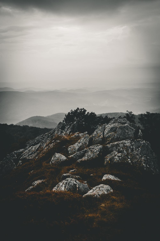 rocks near trees during daytime