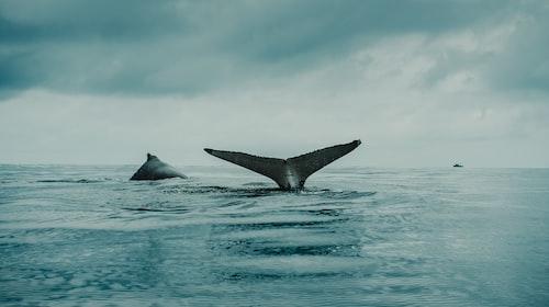 Among the Oldest Marine Mammals