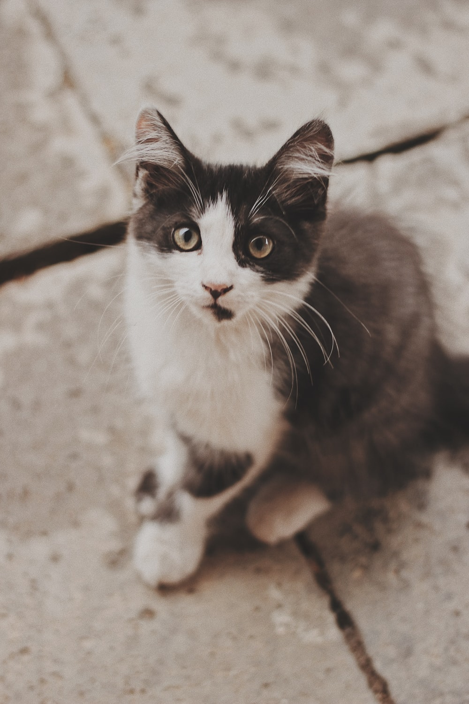 cat sitting on gray concrete pavement