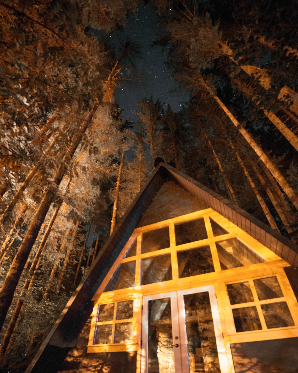 worm view photo of cabin and trees