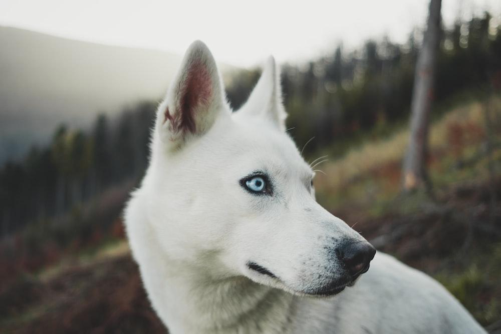close-up photo of white short-coated dog