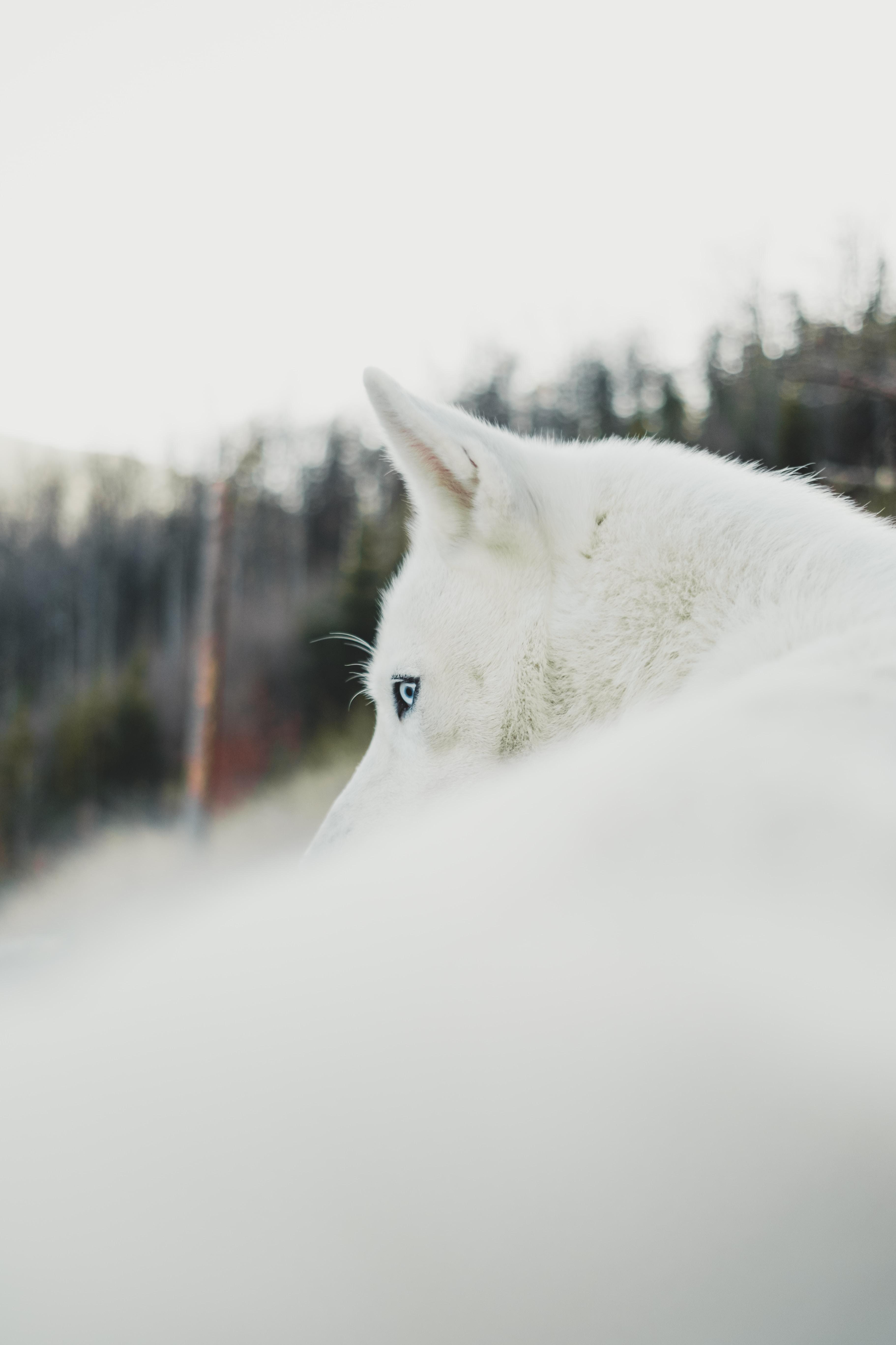 photography of dog