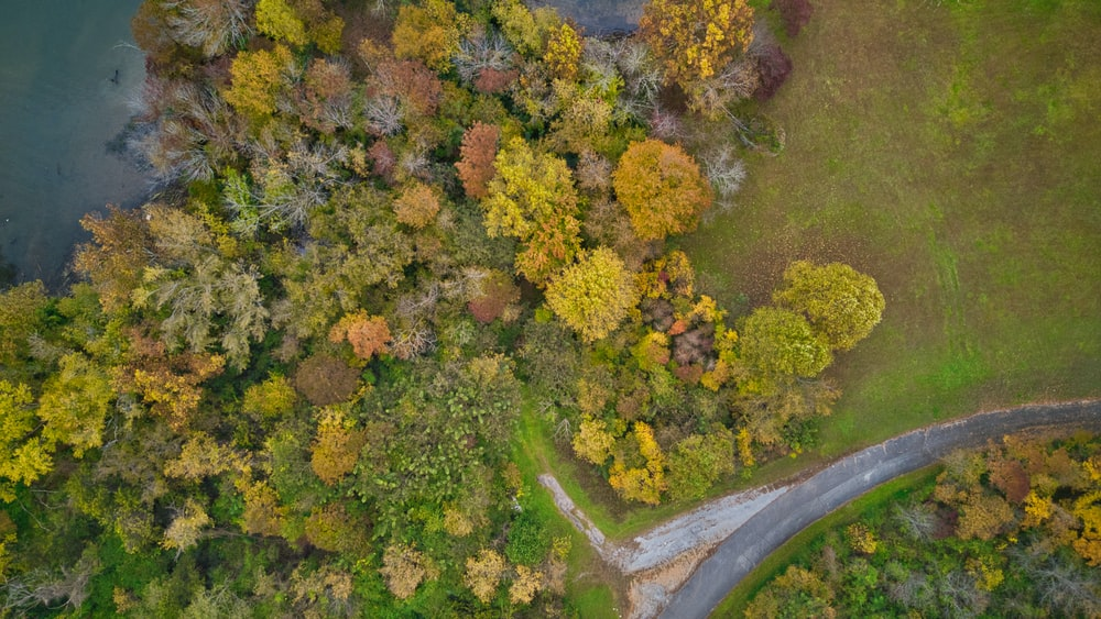high-angle photography of green and brown trees
