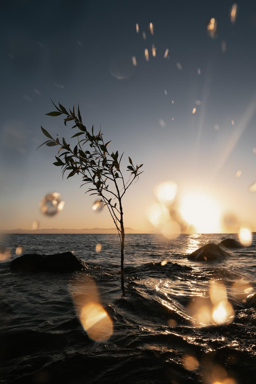 tree and rocks on sea