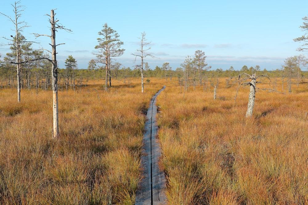 narrow concrete pathway across brown grass field