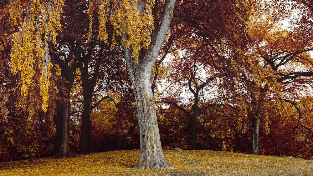 tree on brown grass field