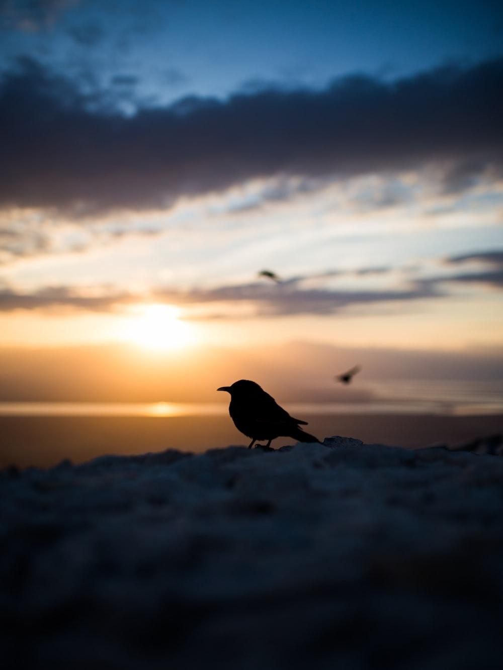 silhouette of bird during golden hour