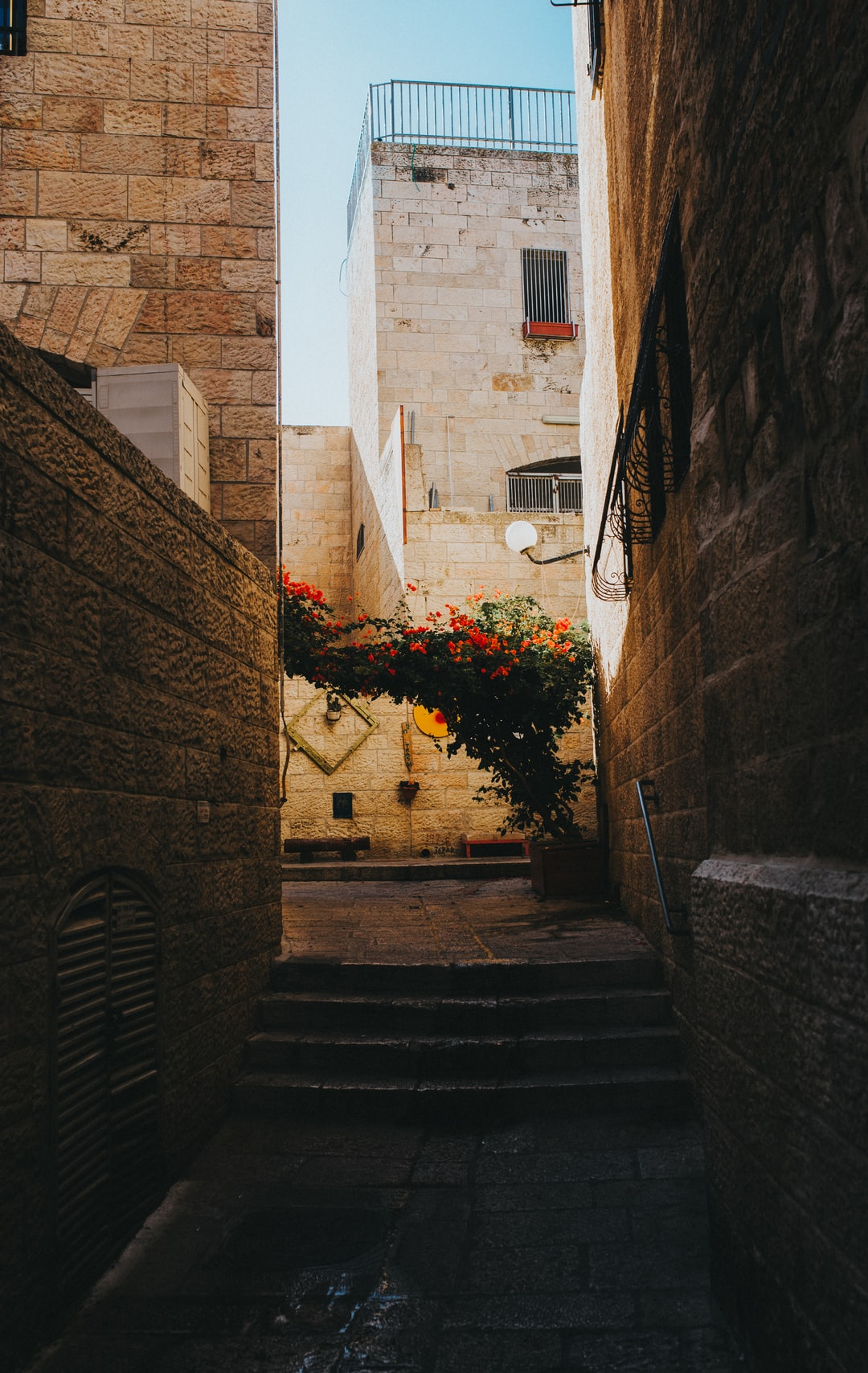 Between ancient structures in an alley breaths light unto a blooming plant.