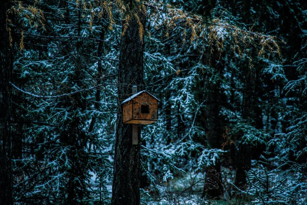 birdhouse on tree trunk