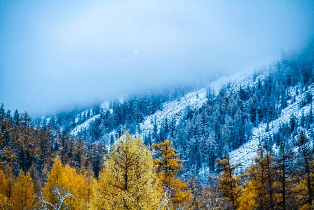 yellow trees near mountain during daytime