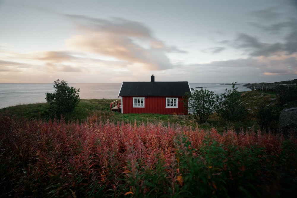 red and black house near flower field
