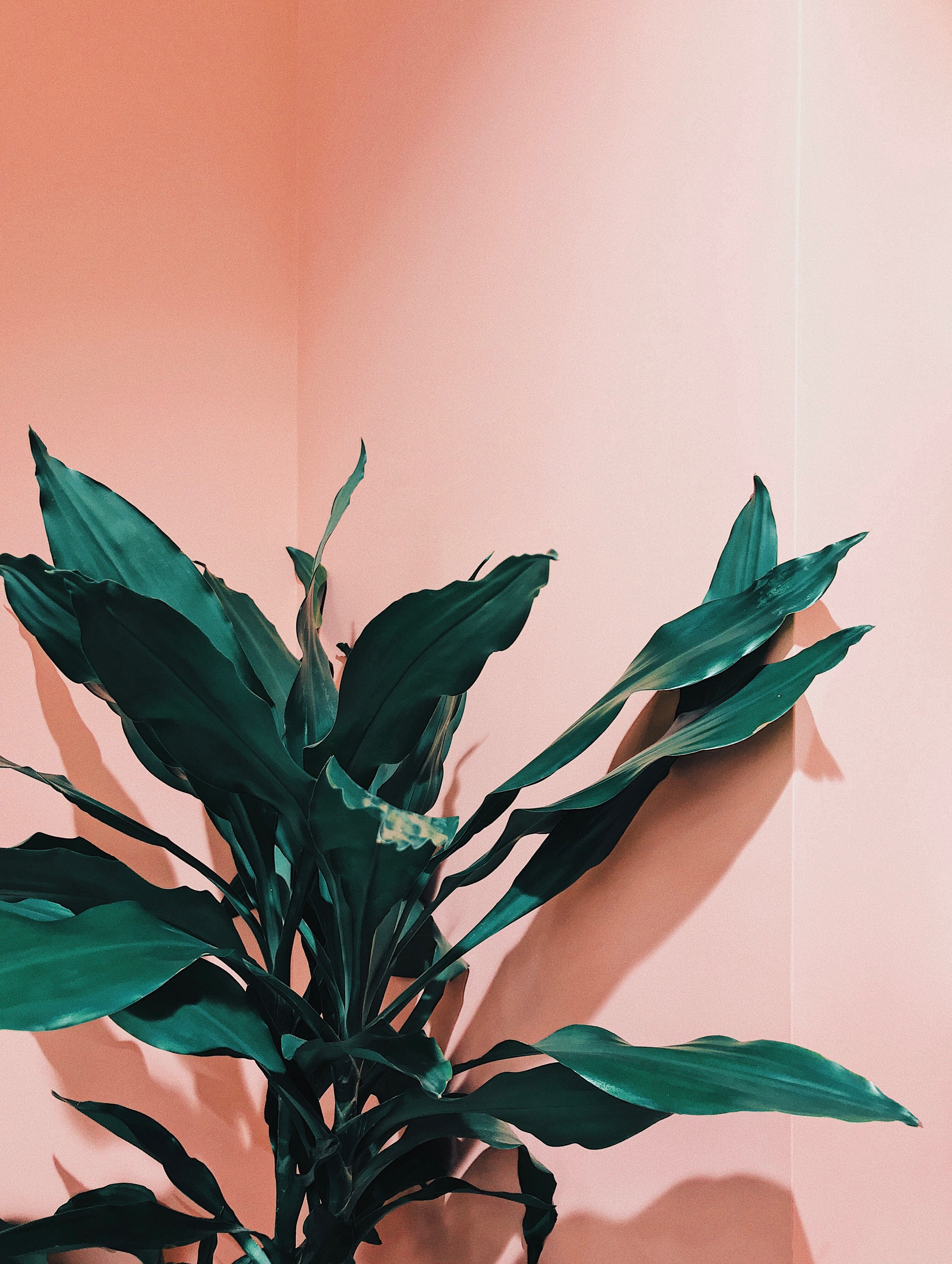 green-leafed plant at the corner of the room