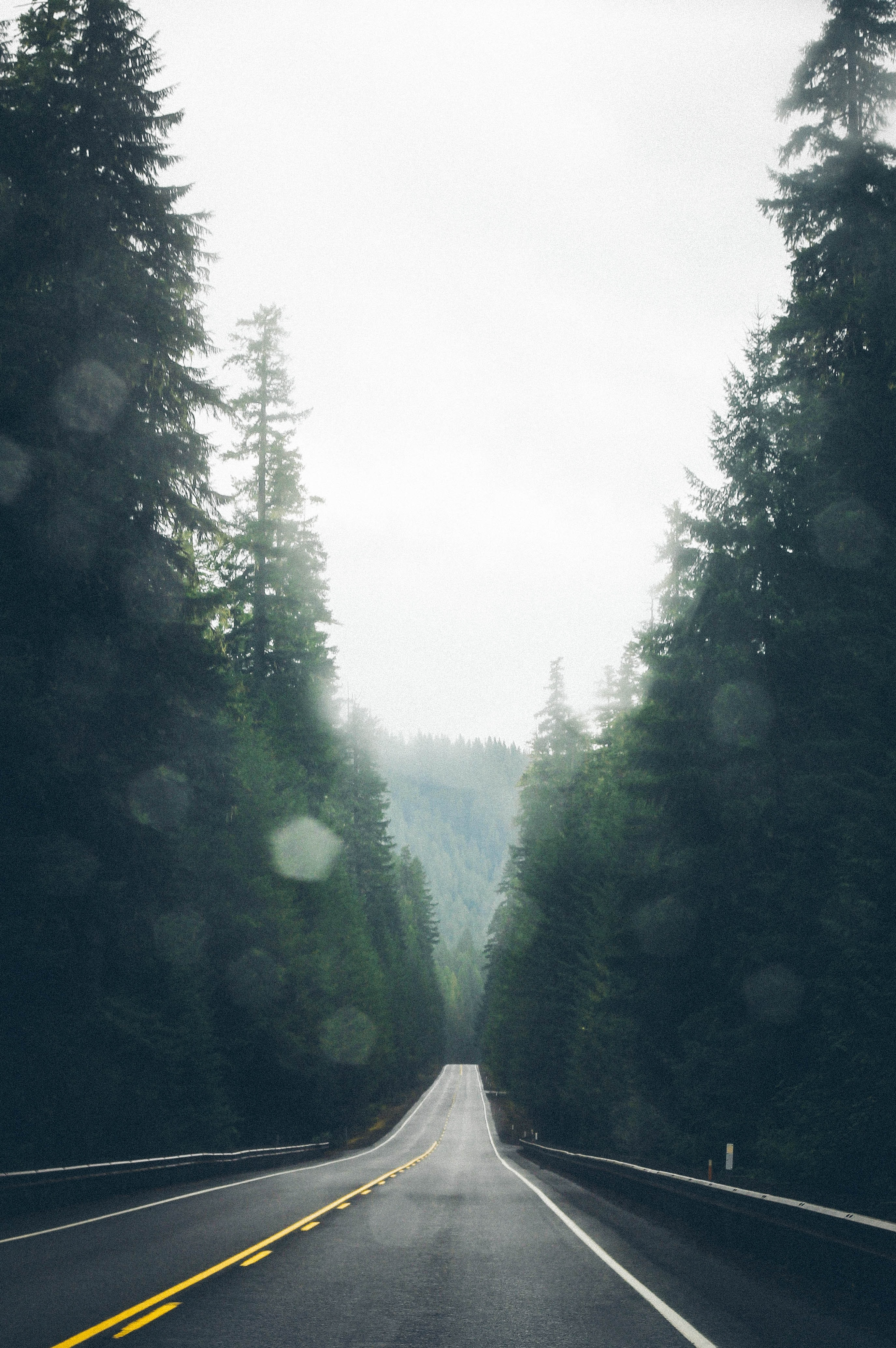 empty asphalt road surrounded by trees