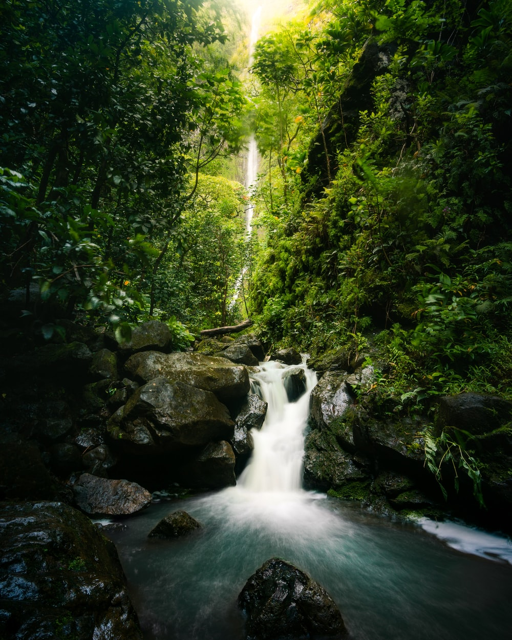 waterfall and forest