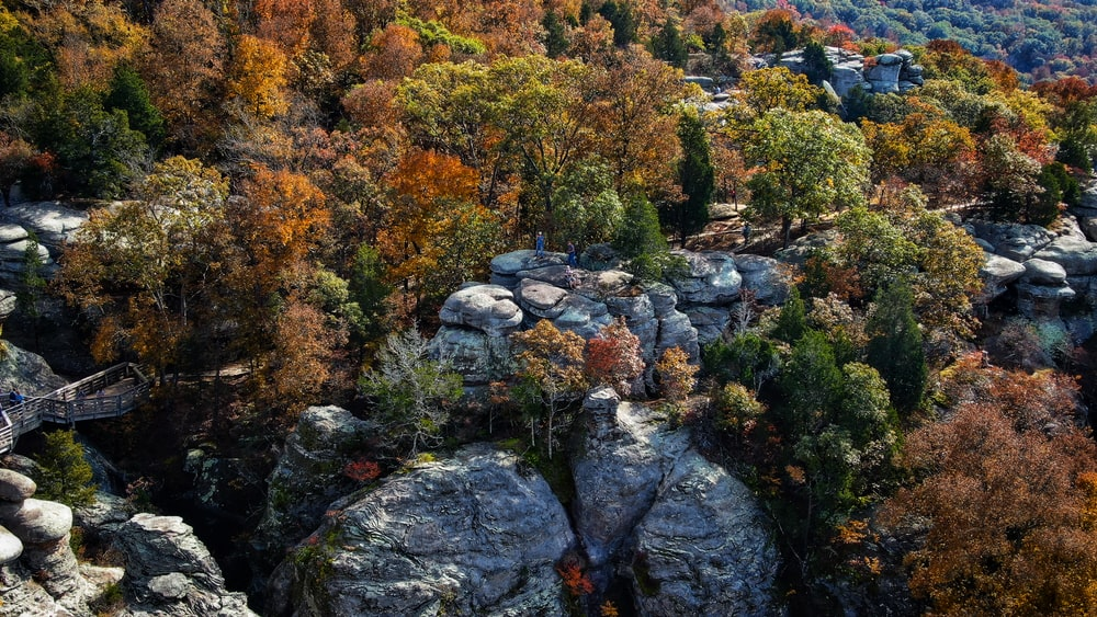 view of trees on rock hills