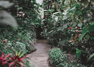 concrete pathway on garden