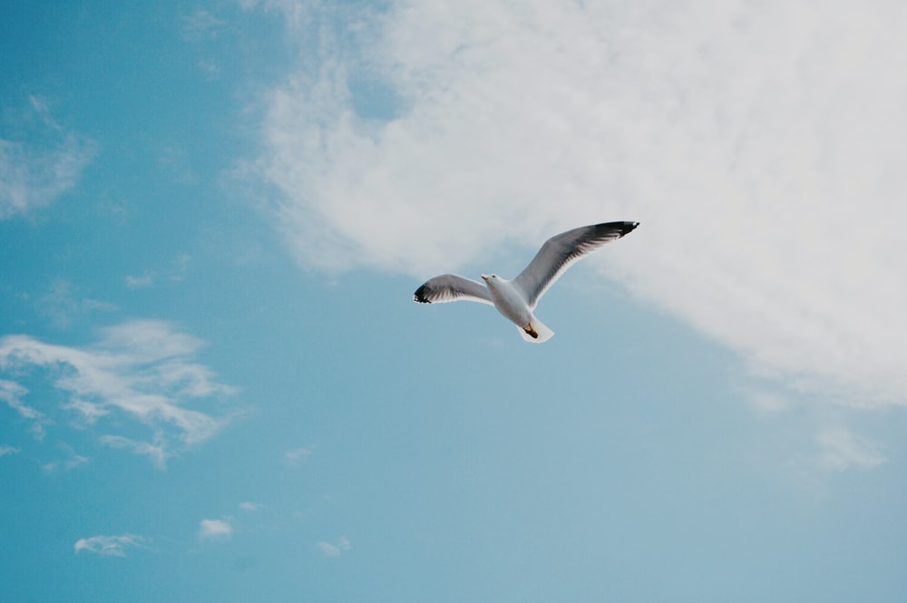 white bird flying in mid air