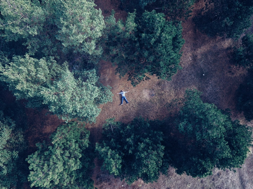 aerial photography of person lying on land surrounded with trees during daytime