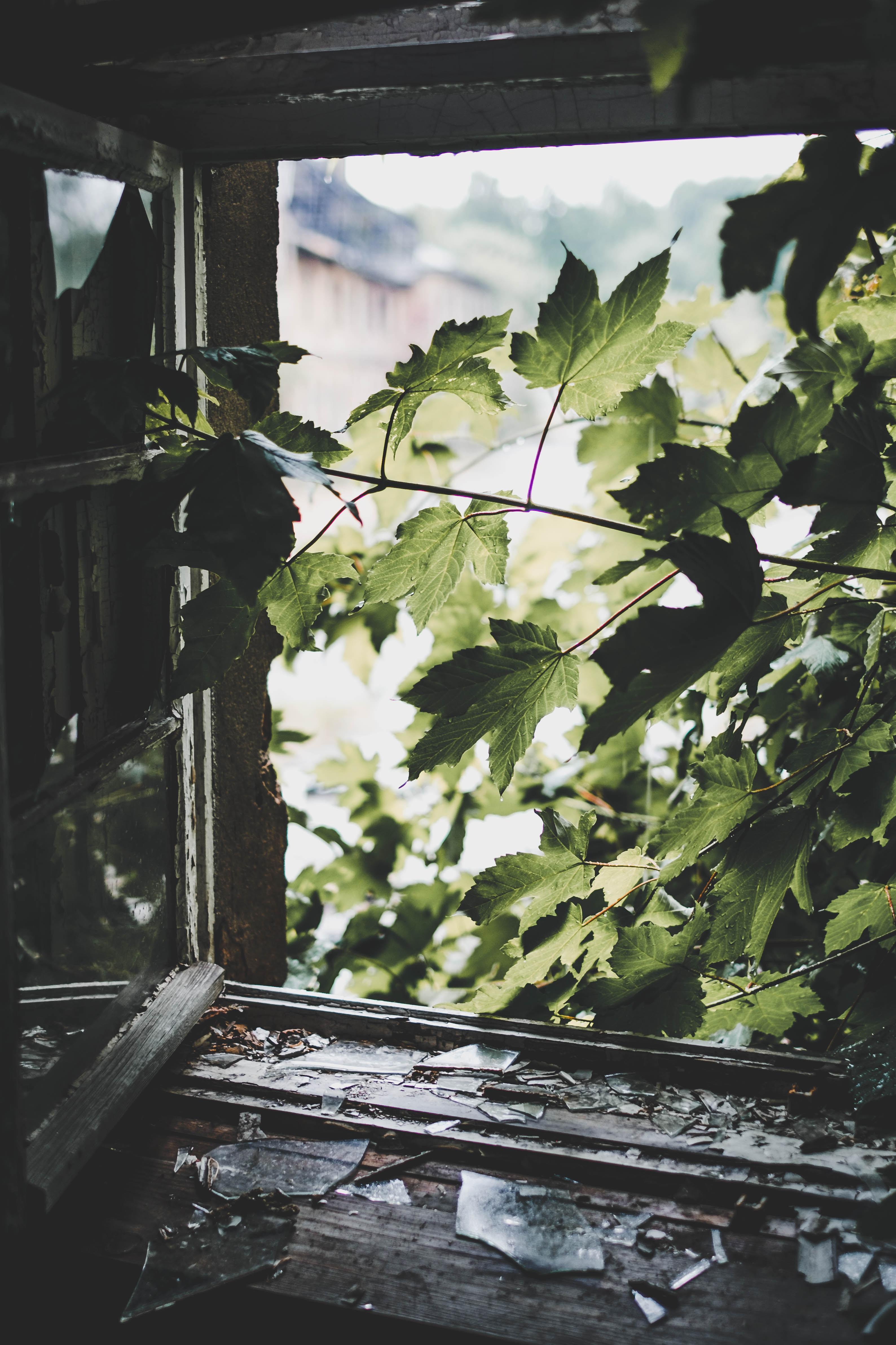 green leafed tree near window