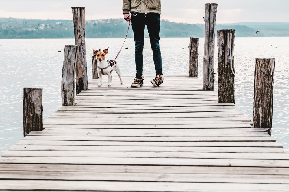 person standing on dock near dog