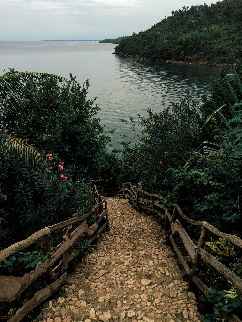 pathway in between plants leading to body of water
