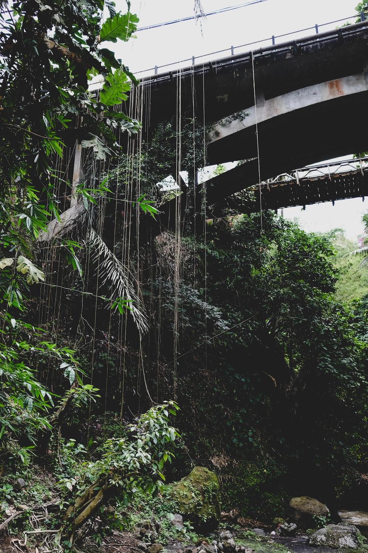 view of hanging bridge