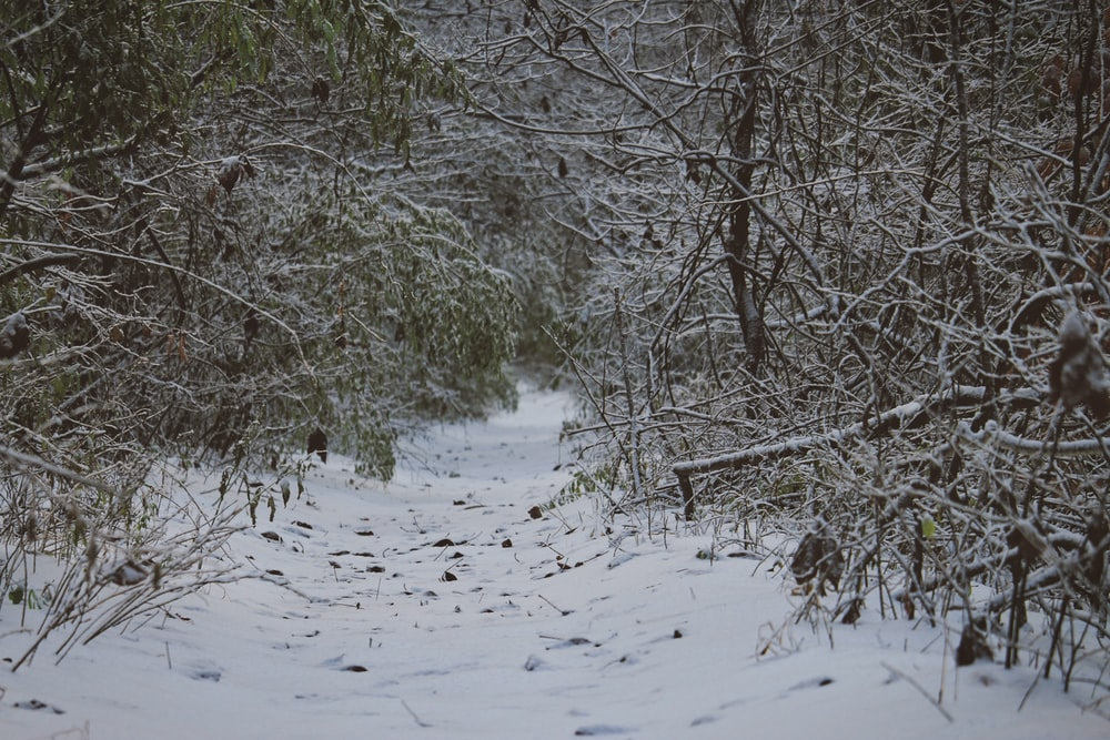 field covered with snow surrounded with trees