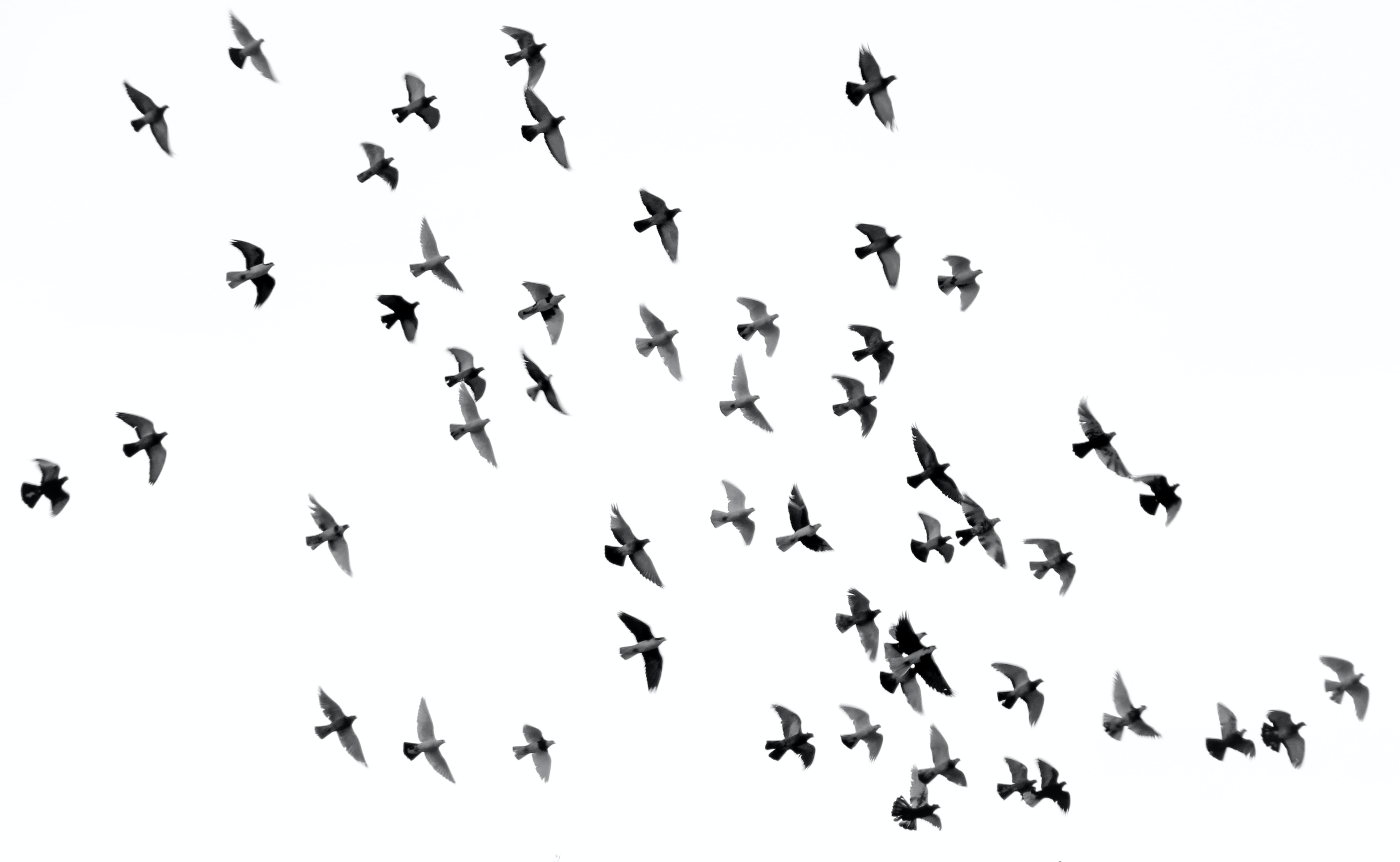 low angle photography of flock of silhouette of bird illustration