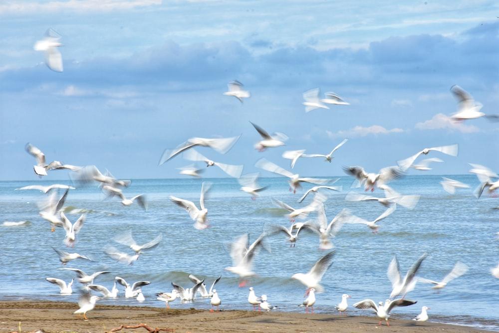 flock of birds at daytime