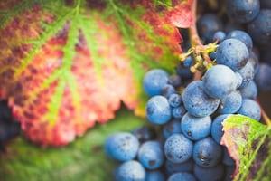 4692. Bor,szőlő, borászatok
