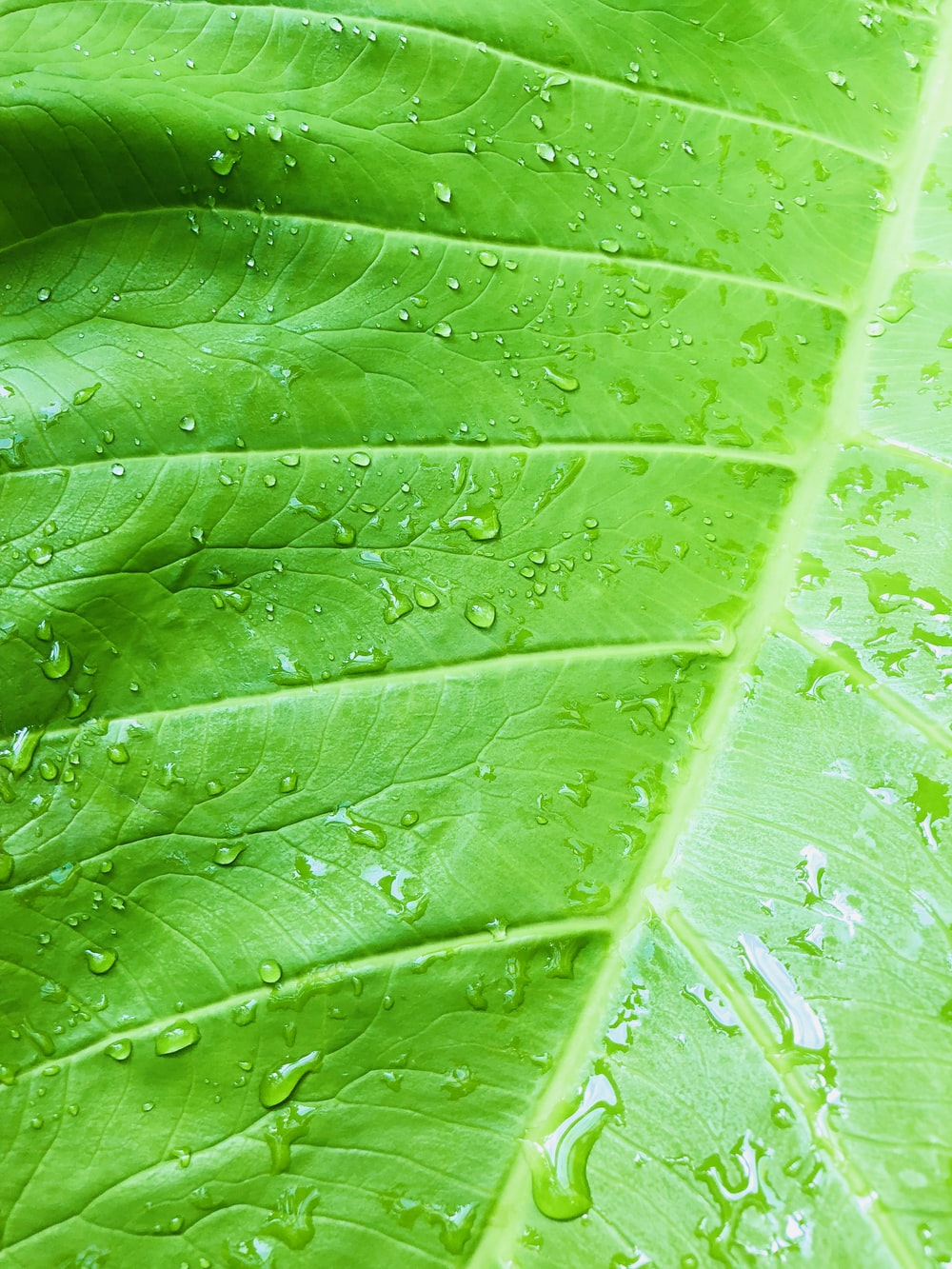 close-up photography of green-leaf