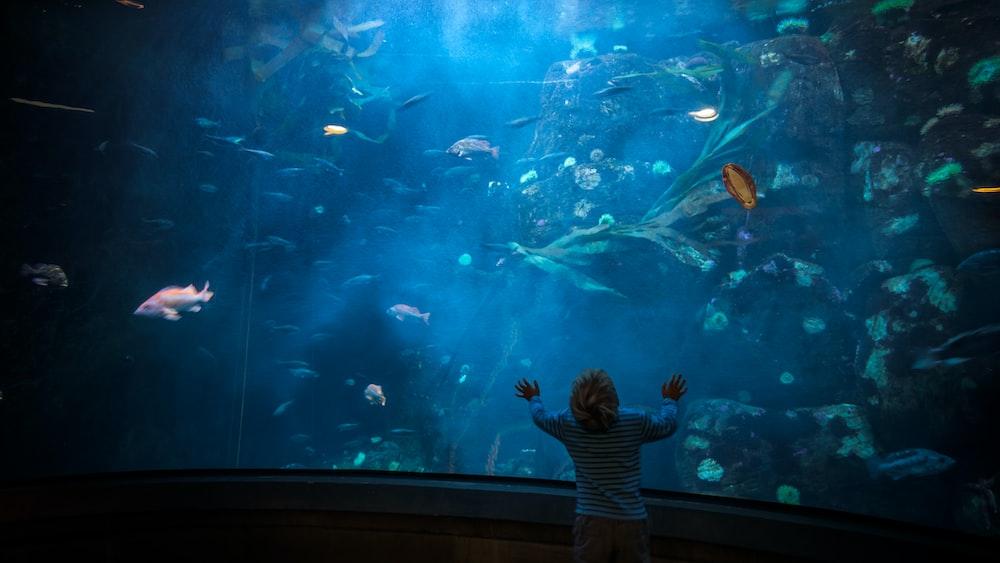 child stands in front of aquarium