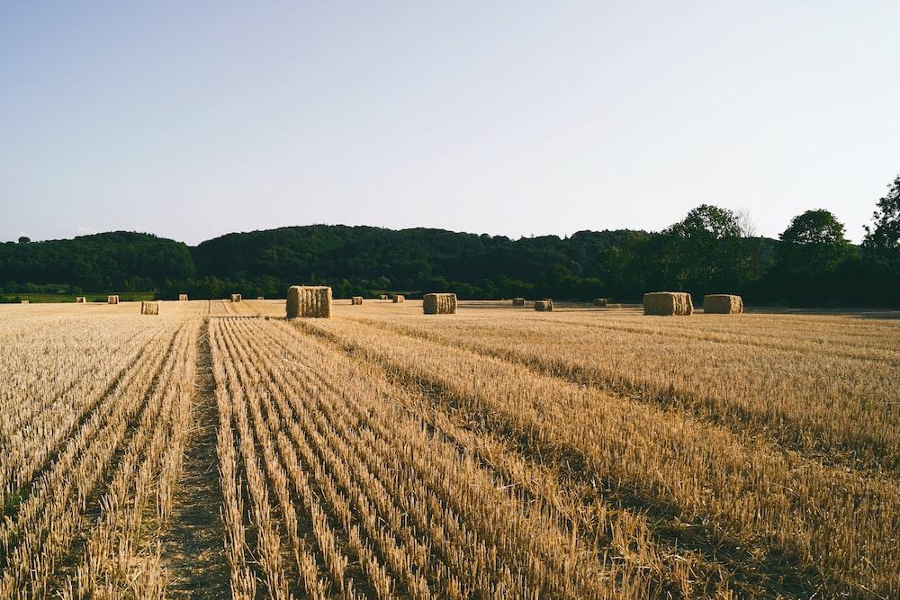 brown field near rolling hays