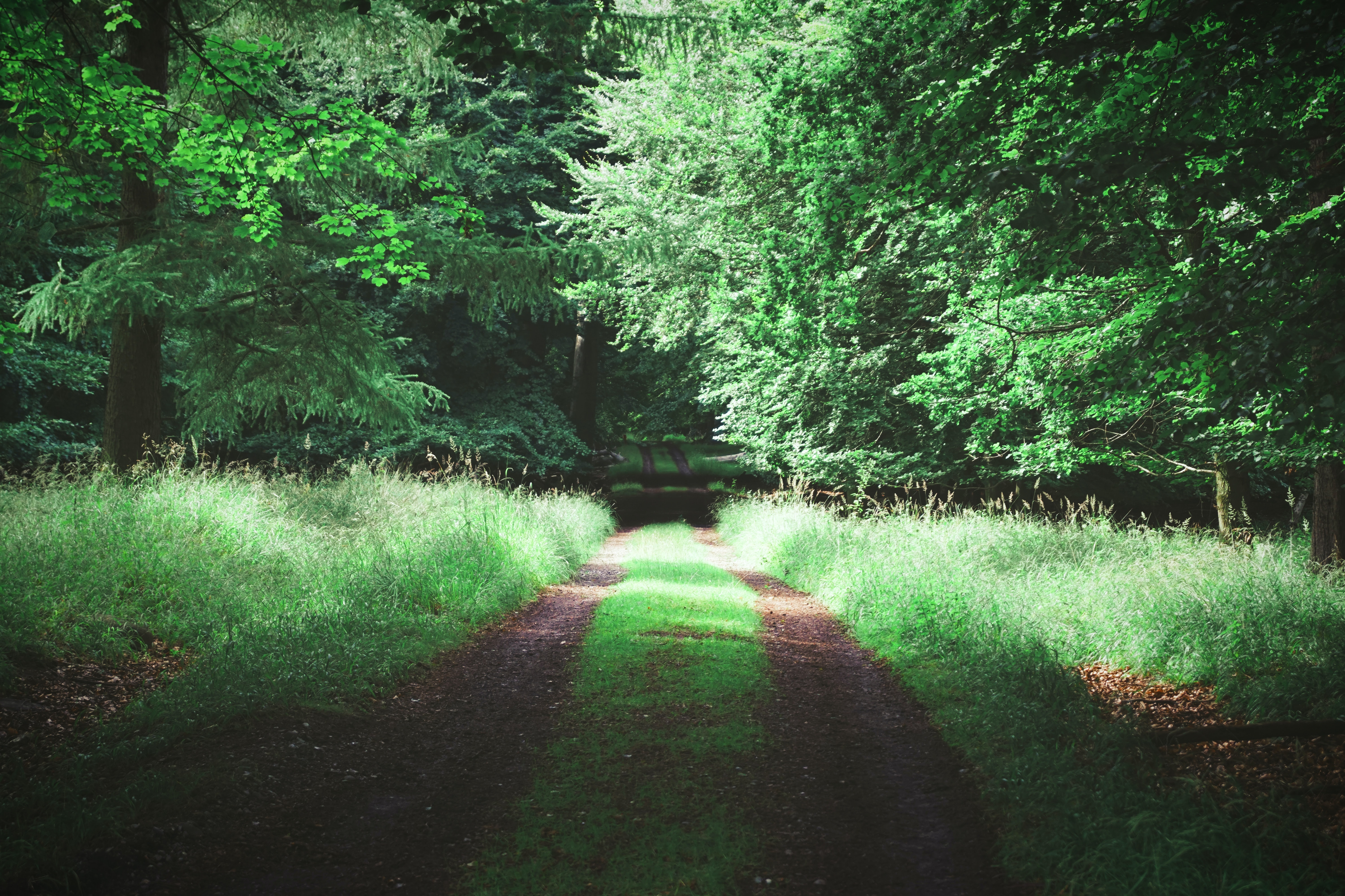 dirt road with green grasses on sides