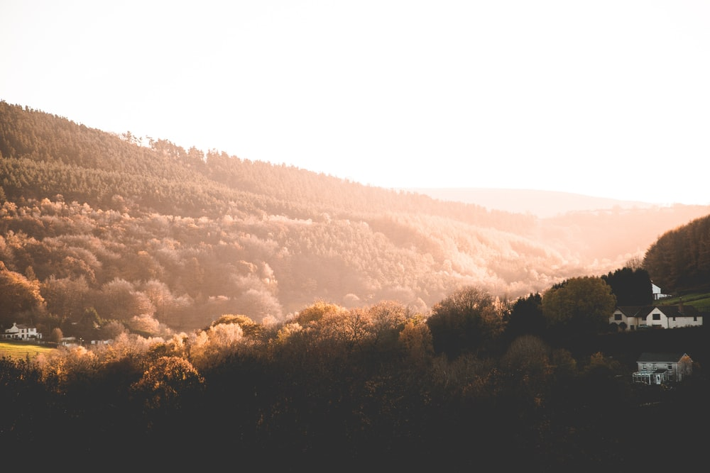 brown trees near mountains at daytime