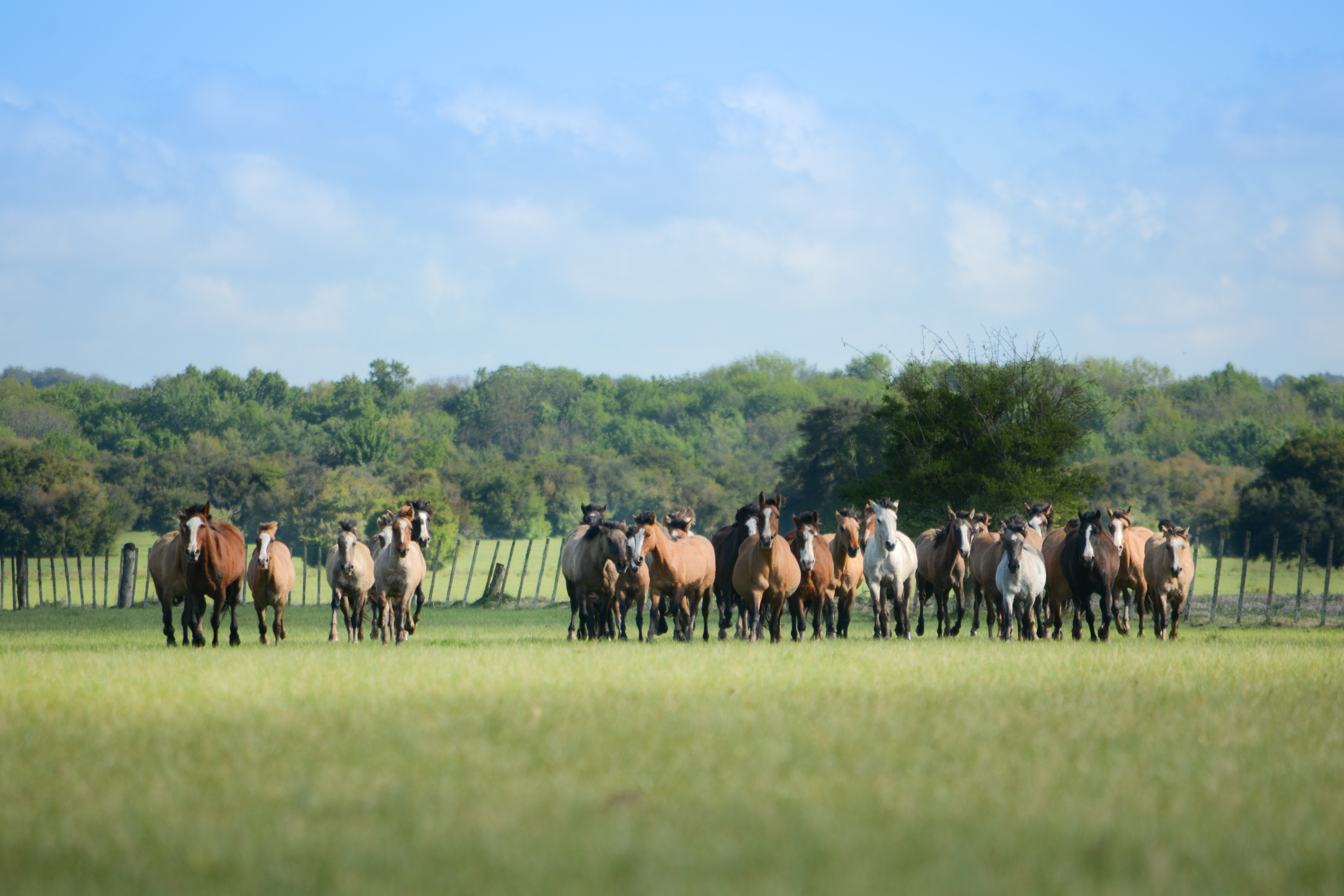 horses standing on grass field at daytime