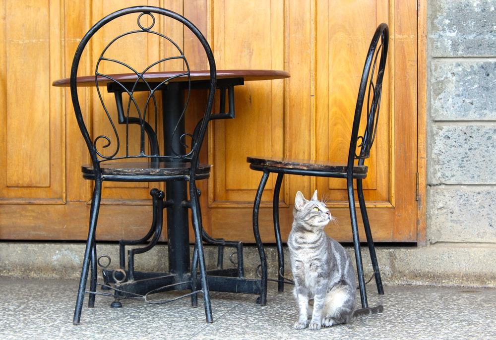 gray and white cat underneath vacant chair
