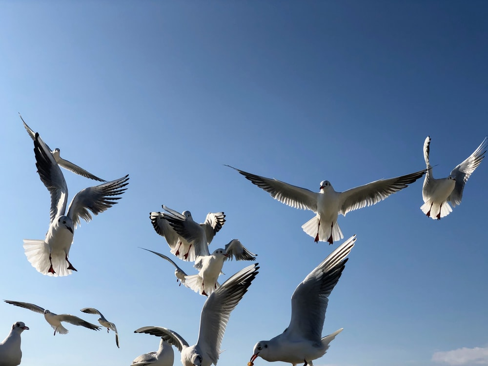 flock of pigeons flying under the sky during daytime