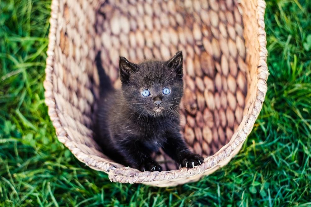 black kitten in wicker basket