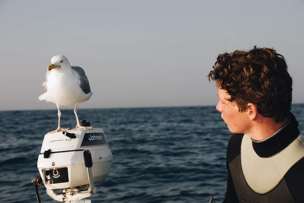 white and black bird fetched on black outboard motor